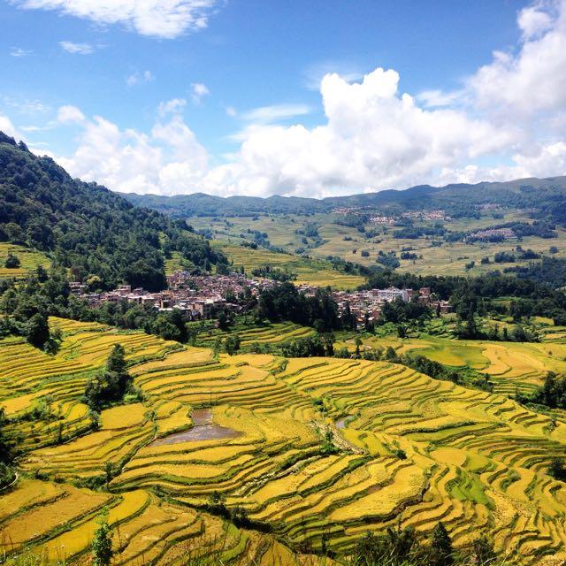 Les rizières de Yuanyang