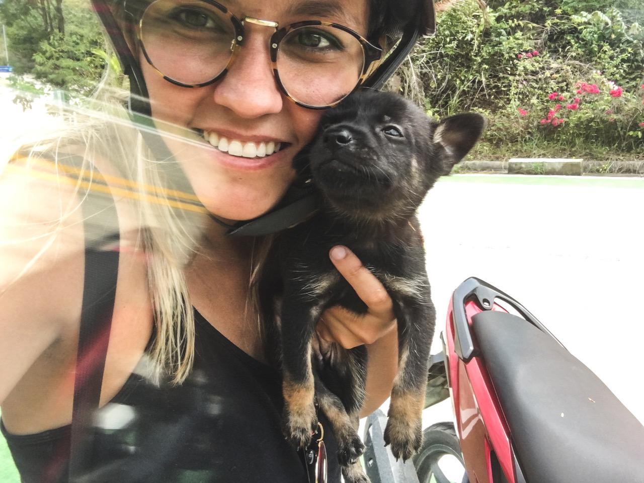 Quoi faire à Koh Phangan? Se faire de nouveaux amis canins