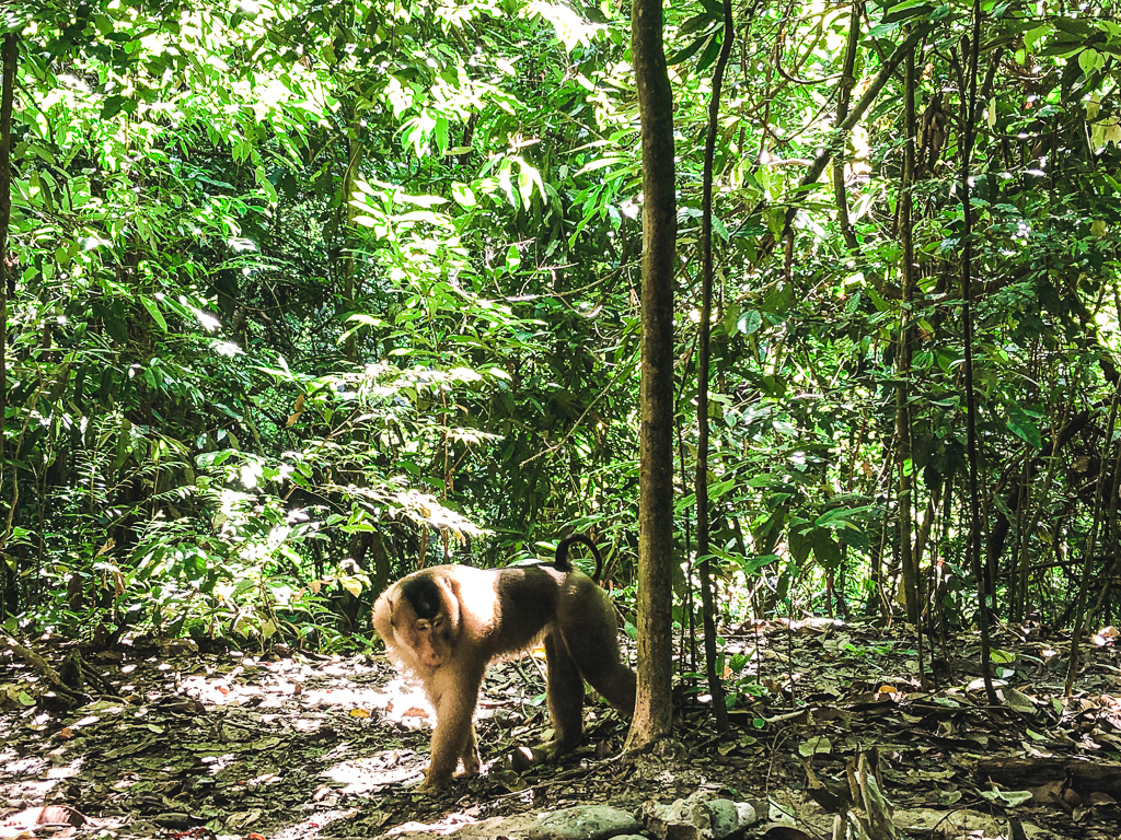 Trek dans la jungle à Sumatra