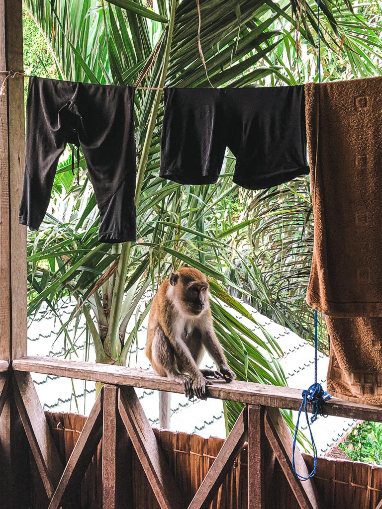 Un singe sur mon balcon à Bukit Lawang à Sumatra
