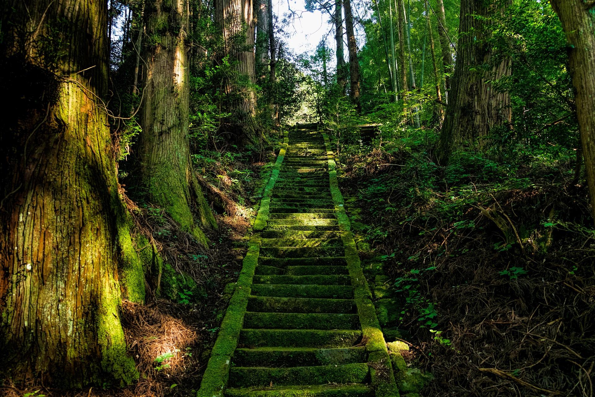 Visiter Shikoku au Japon