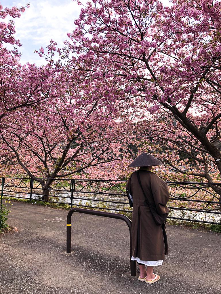 Voir les sakura de Kawazu sur Izu au Japon